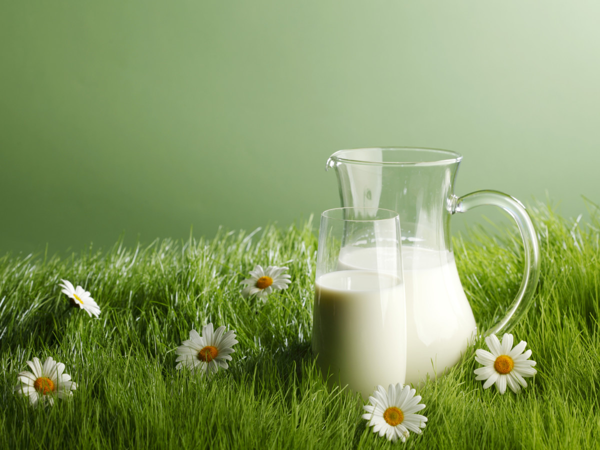 pitcher and glass of goatmilk in field of grass and daisies
