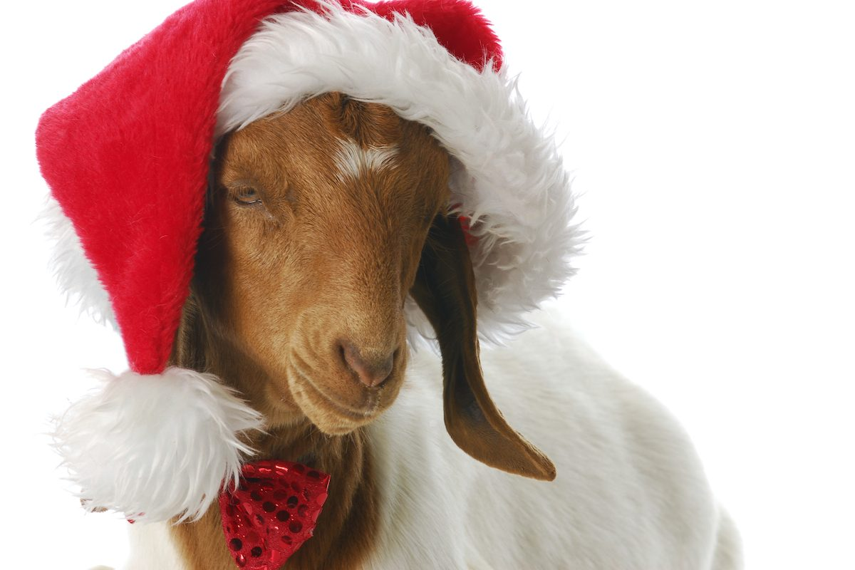 happy-holidays-goat